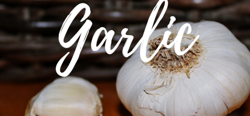 Know Your Ingredients – Garlic